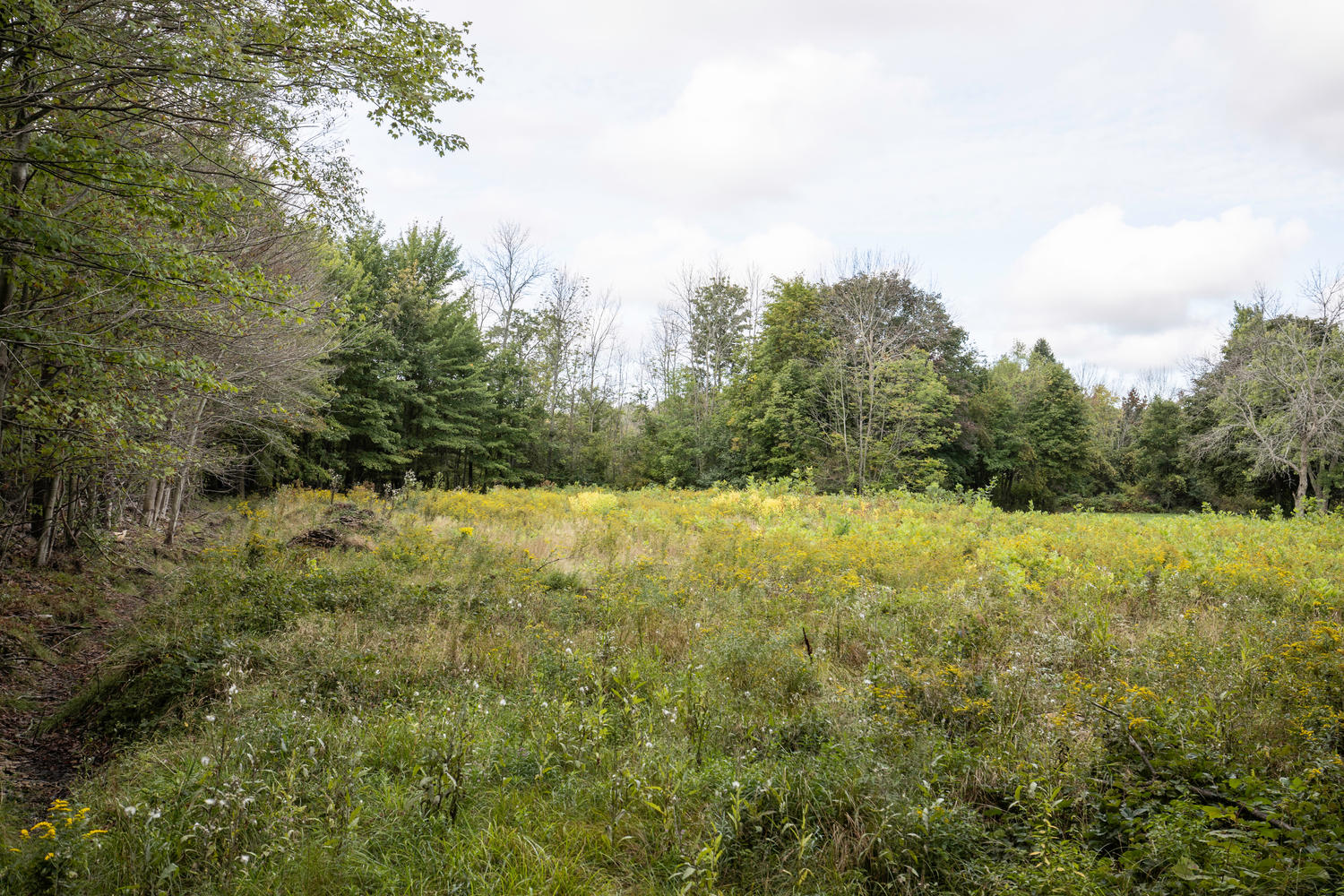 1435 Wisconsin Rd Derby NY-large-002-001-Land-1500×1000-72dpi