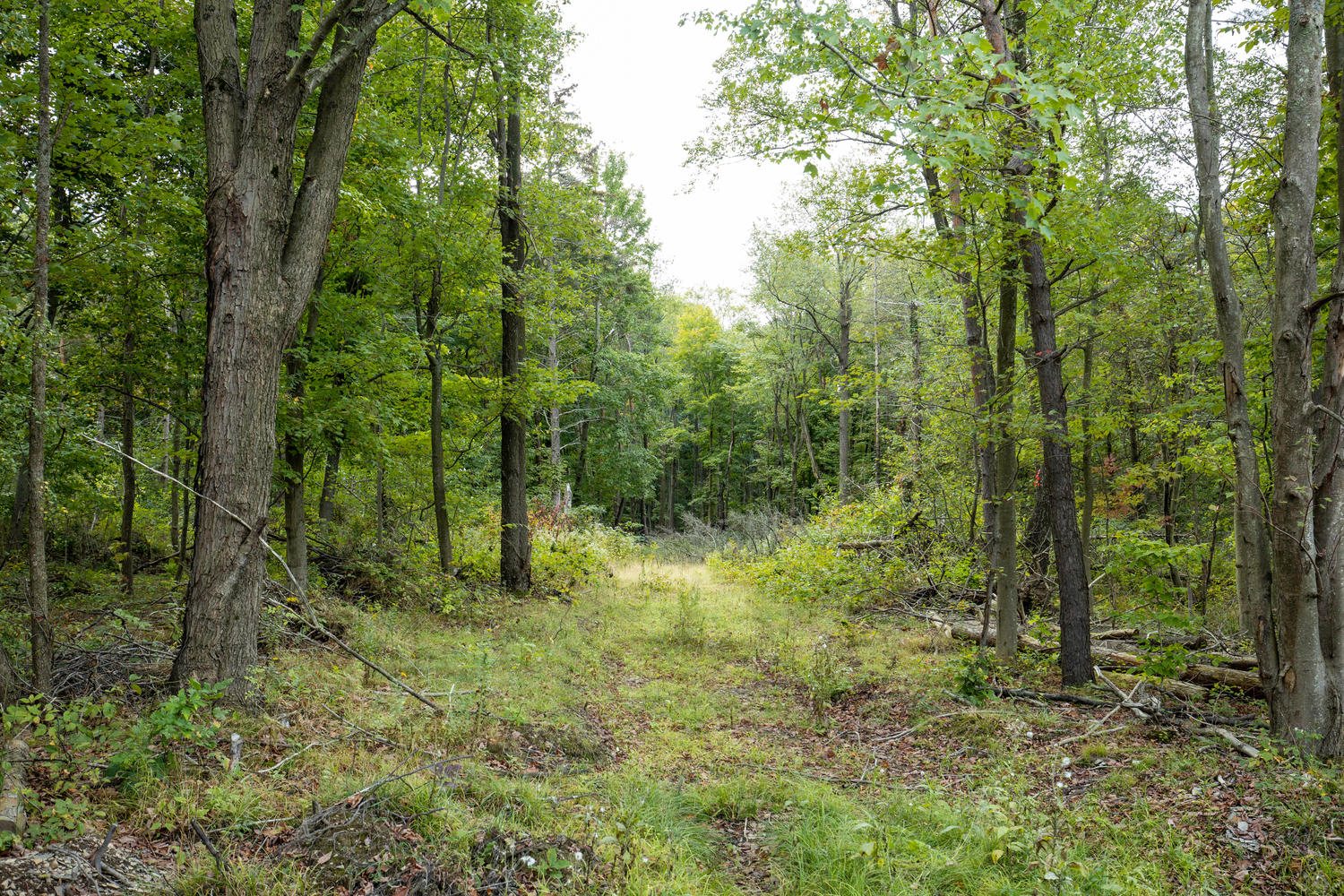 1435 Wisconsin Rd Derby NY-large-003-002-Land-1500×1000-72dpi